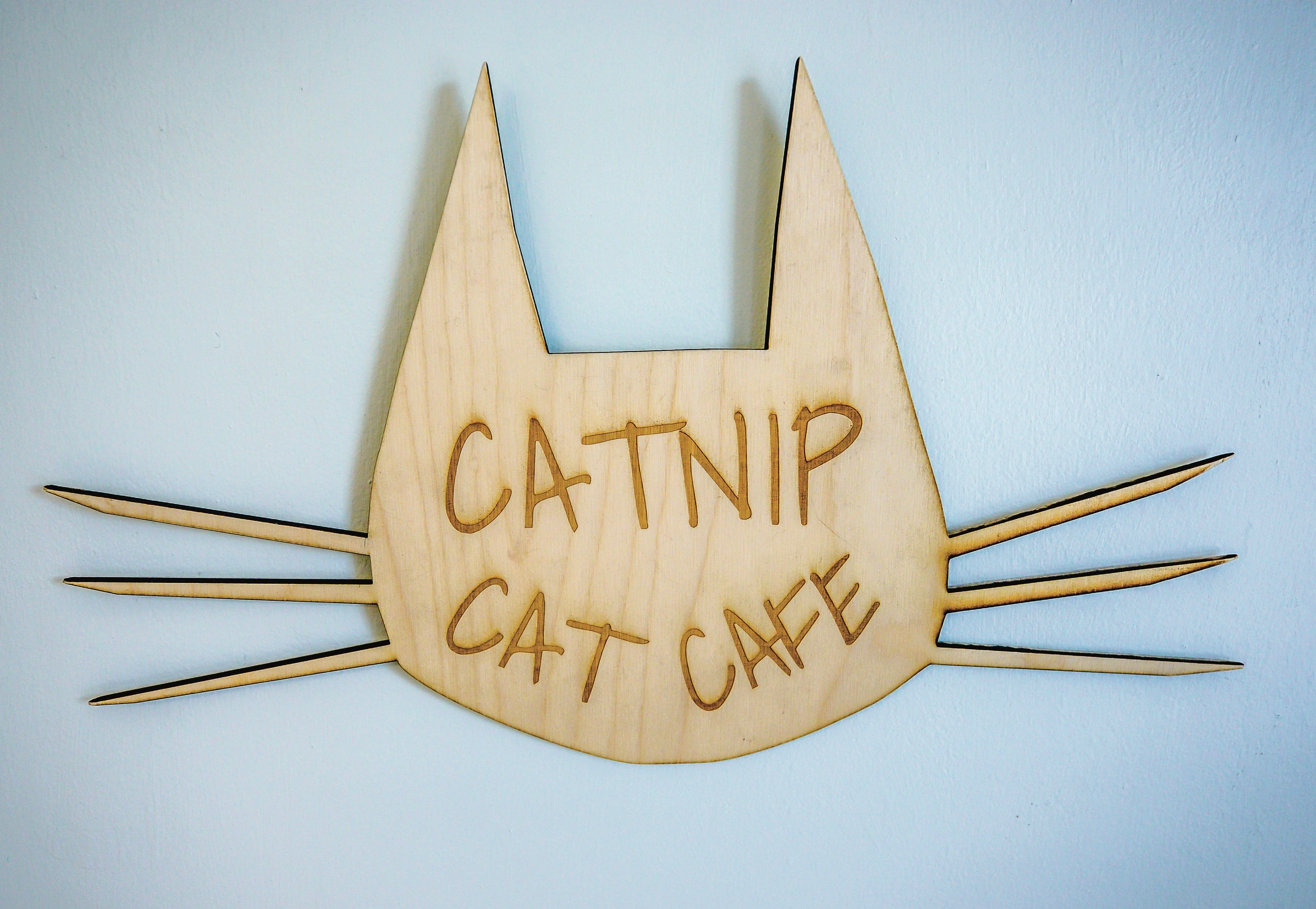 Catnip Cat Cafe, Homeless cats, homeless kitties