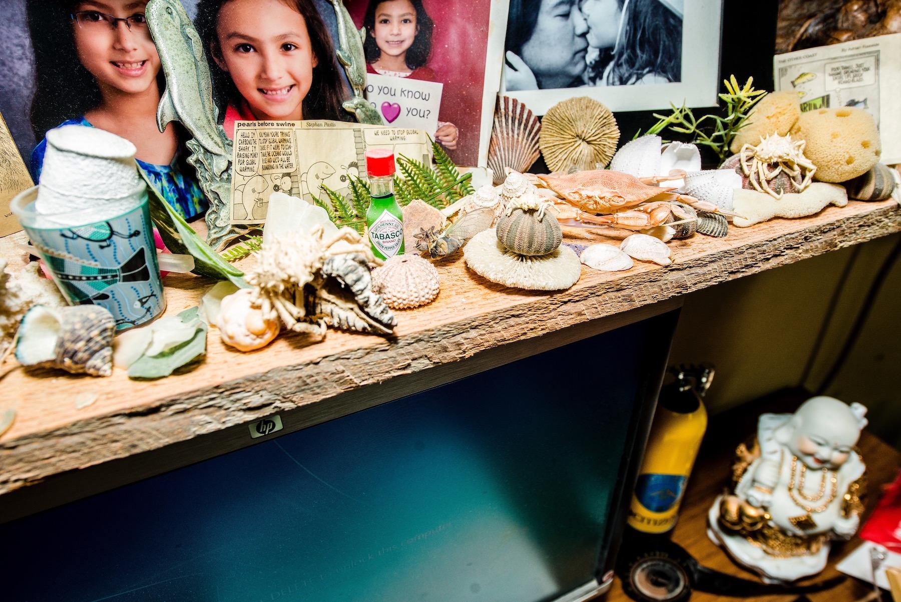 Virginia Aquarium Desk, sea shells, coral
