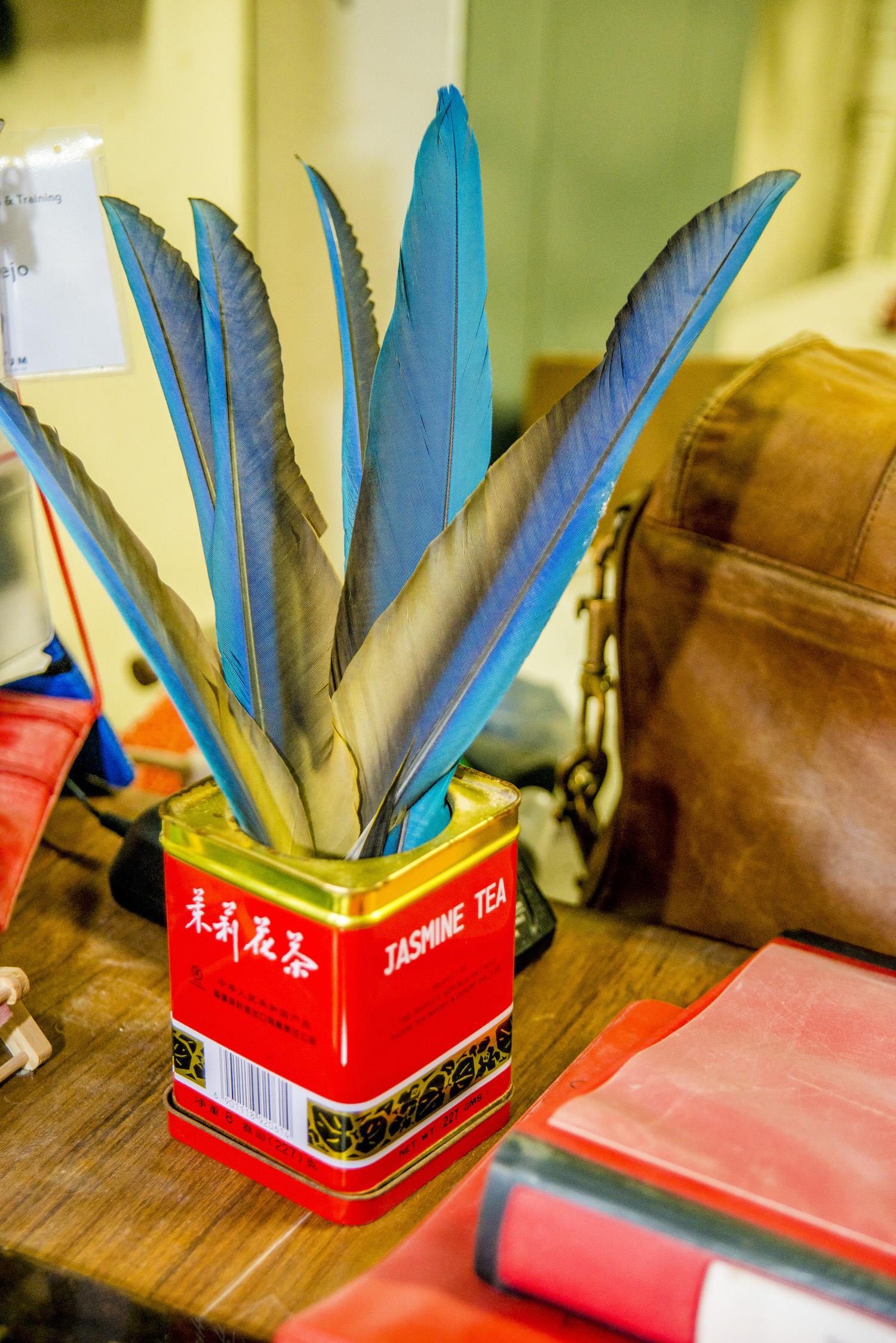 Virginia Aquarium, Macaw Feathers on Desk