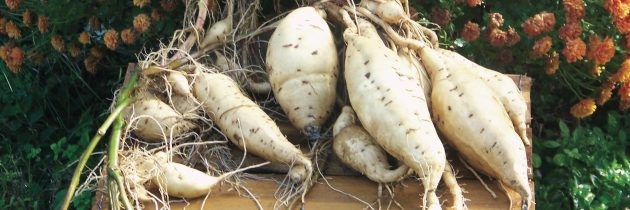 Orapeake Farms Keeps Vanishing Local Flavors Alive