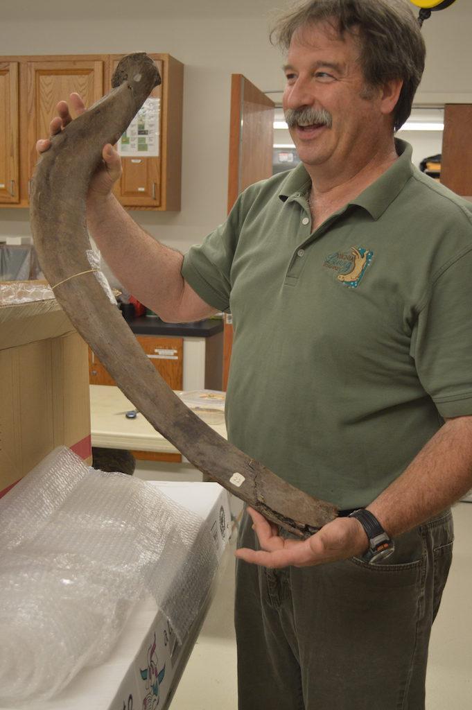 VLM mastodon fossil