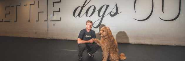 Dogtown and Dog Perk Create a Place for Dogs to Go