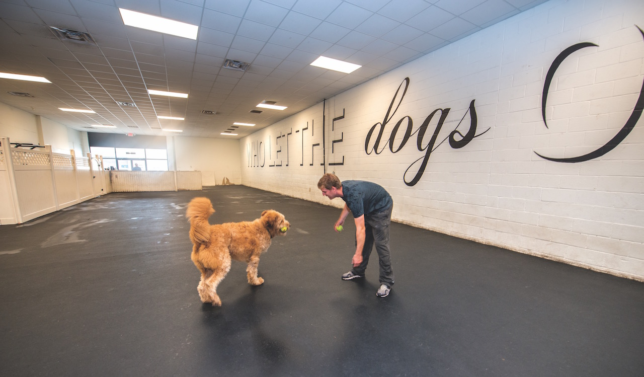 Dogtown dog daycare in Norfolk