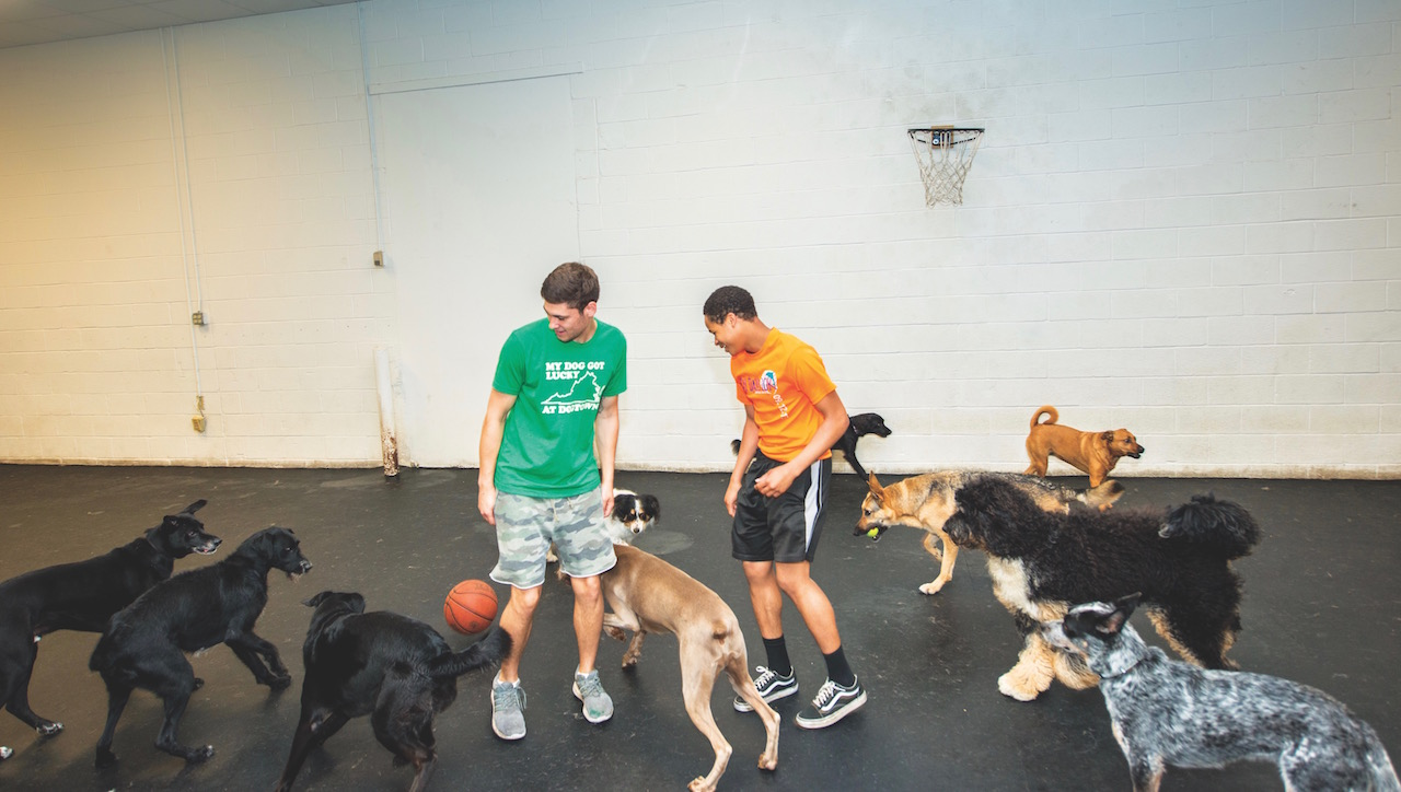 Dogtown dog daycare