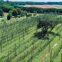 A Revolution in Virginia Hops Farming