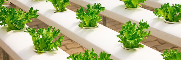 State-of-the-Art Hydroponic Greenhouse Coming to Virginia Beach